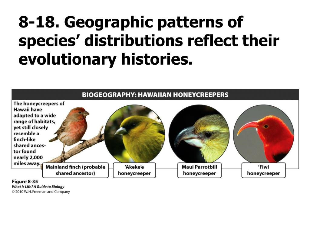 8-18. Geographic patterns of species' distributions reflect their evolutionary histories.