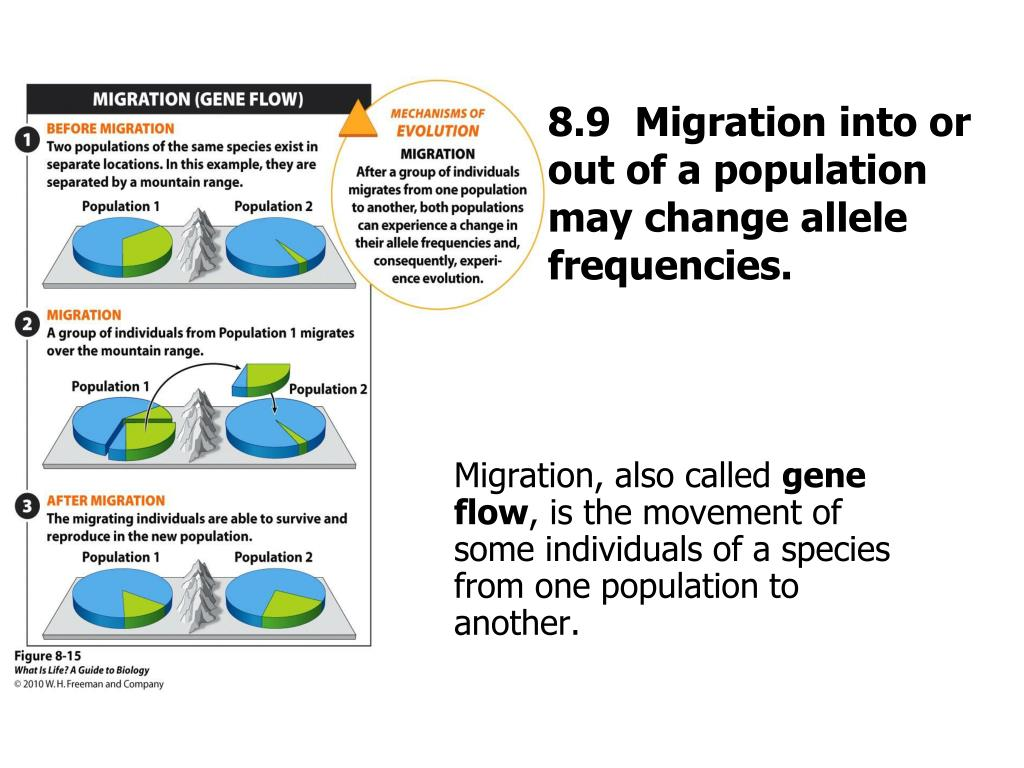 8.9  Migration into or out of a population may change allele frequencies.