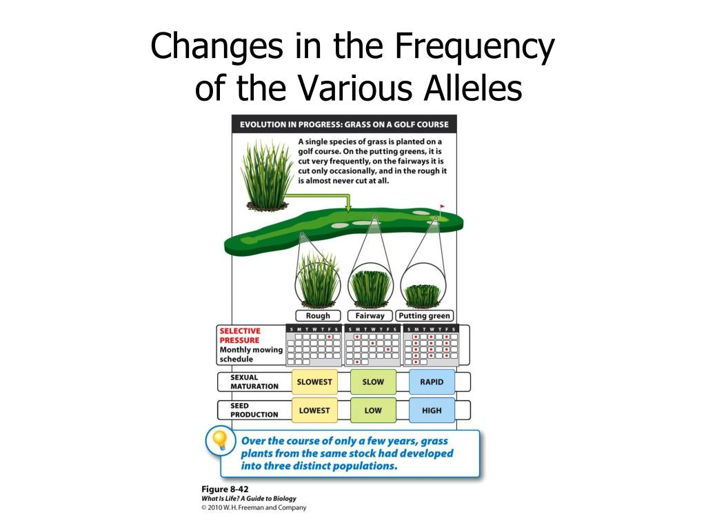 Changes in the Frequency