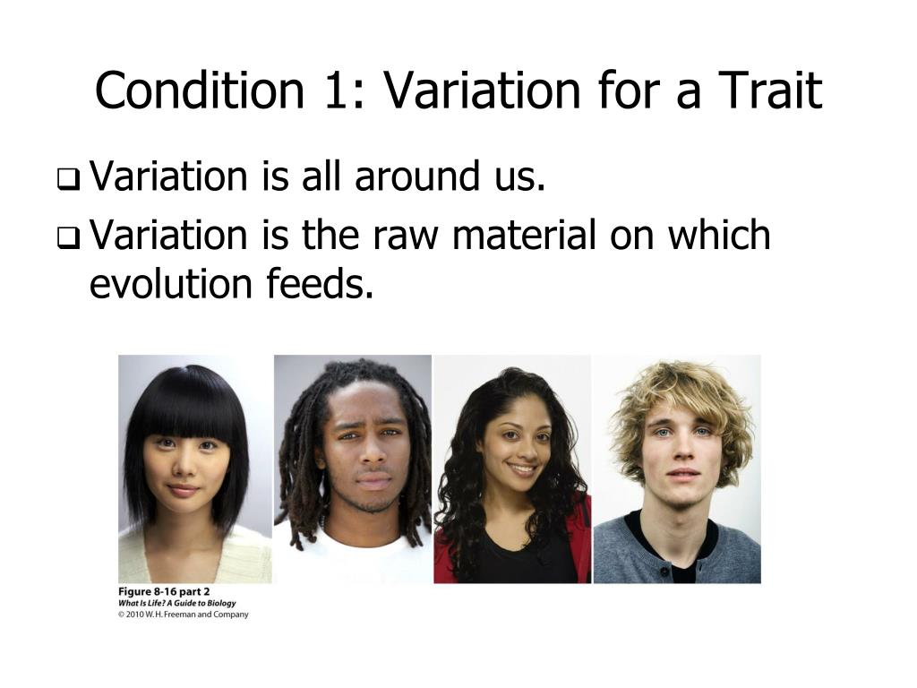 Condition 1: Variation for a Trait