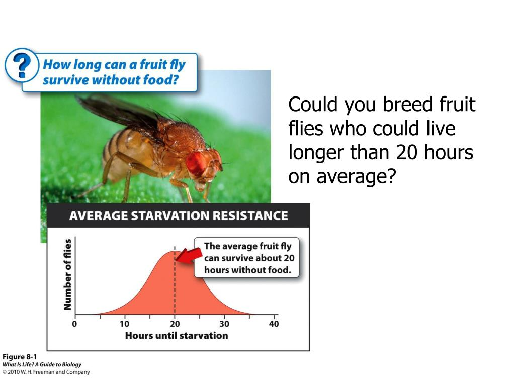 Could you breed fruit flies who could live longer than 20 hours on average?