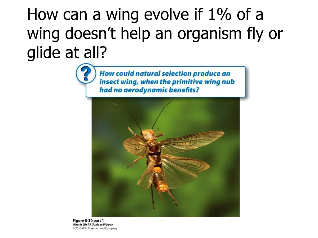 How can a wing evolve if 1% of a wing doesn't help an organism fly or glide at all?