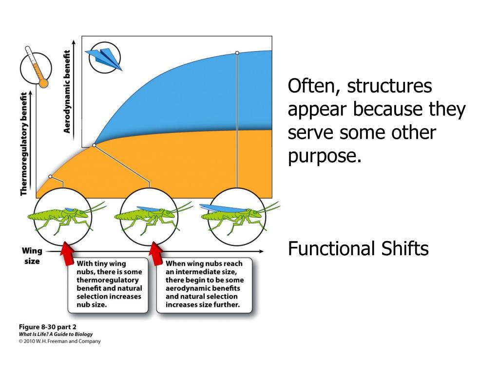 Often, structures appear because they serve some other purpose.