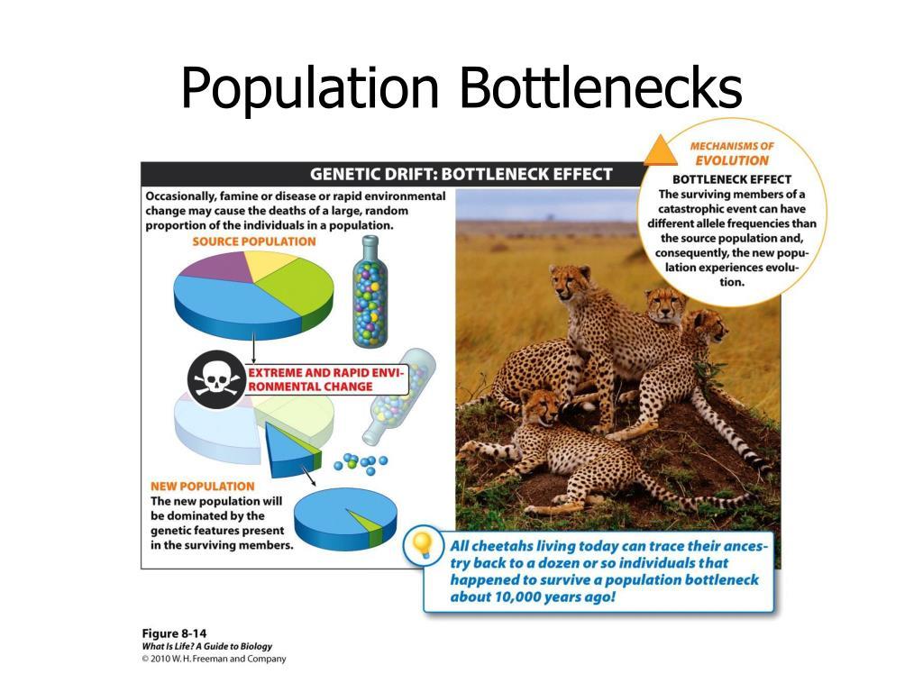 Population Bottlenecks