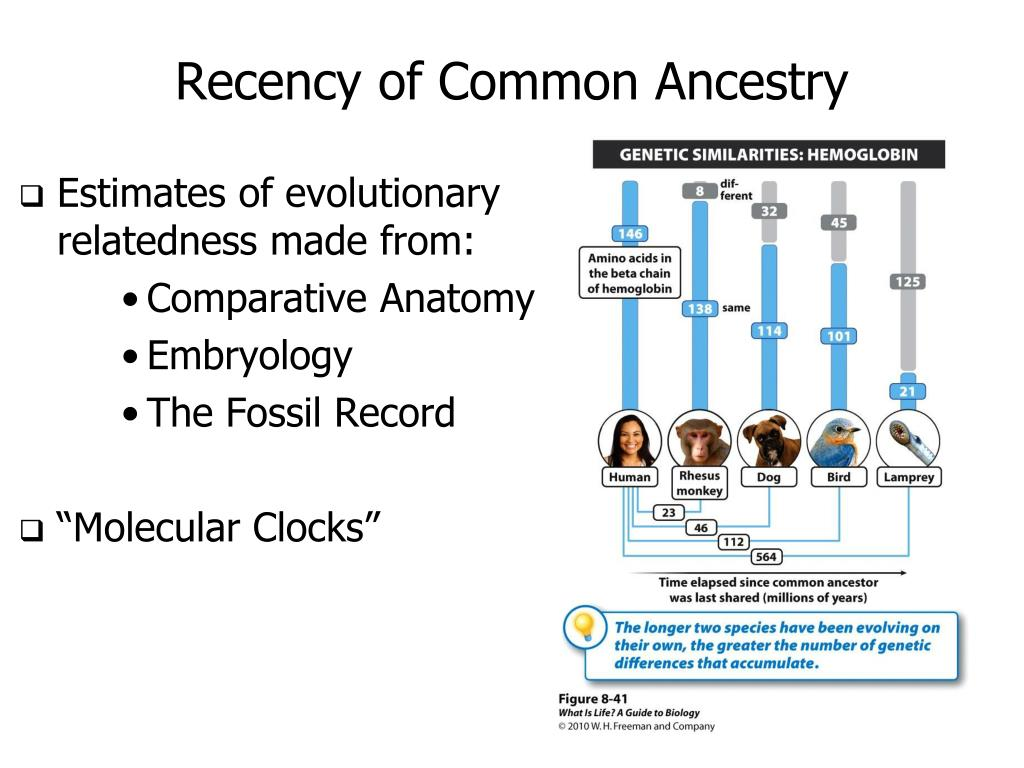 Recency of Common Ancestry