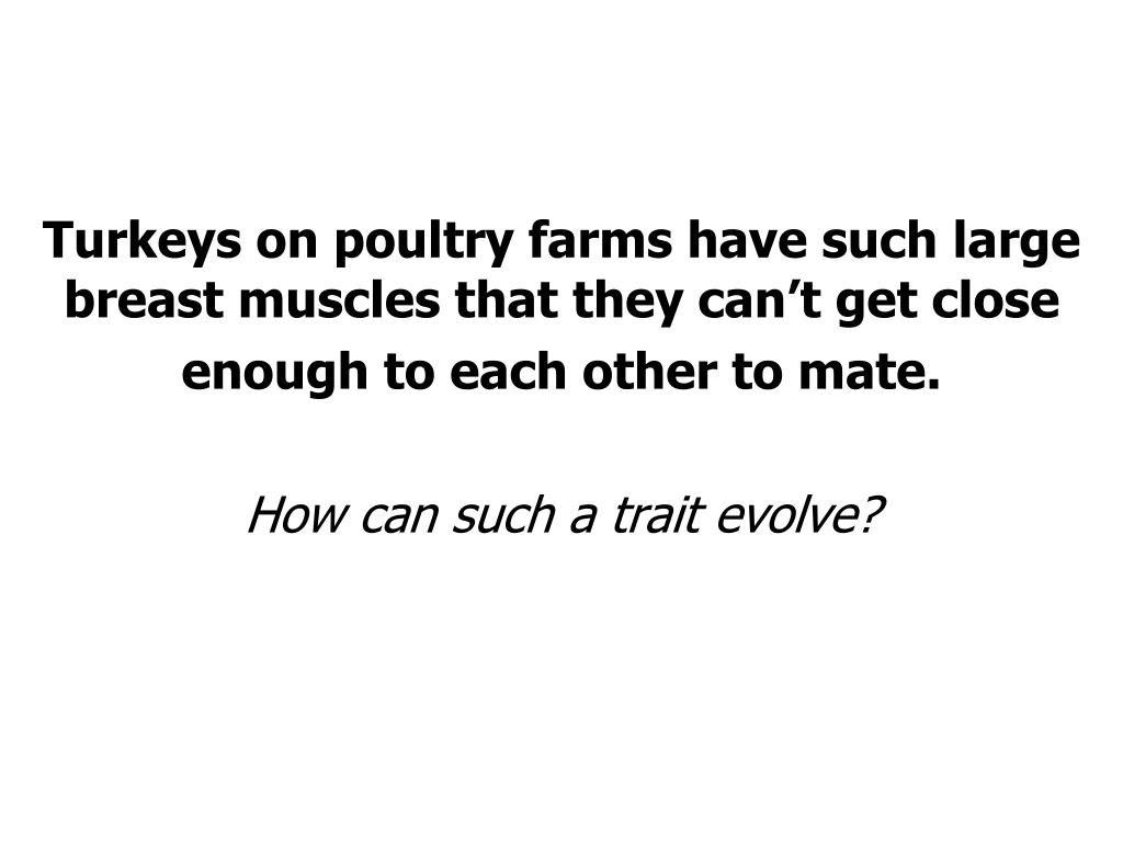 Turkeys on poultry farms have such large breast muscles that they can't get close enough to each other to mate.