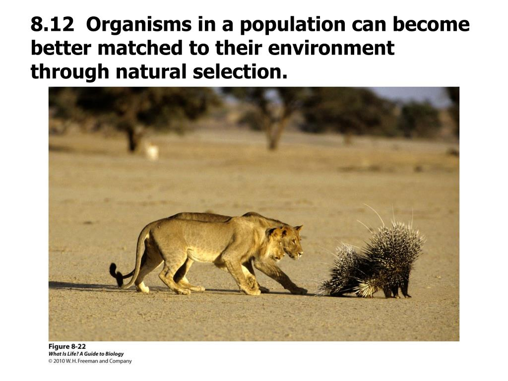 8.12  Organisms in a population can become better matched to their environment through natural selection.