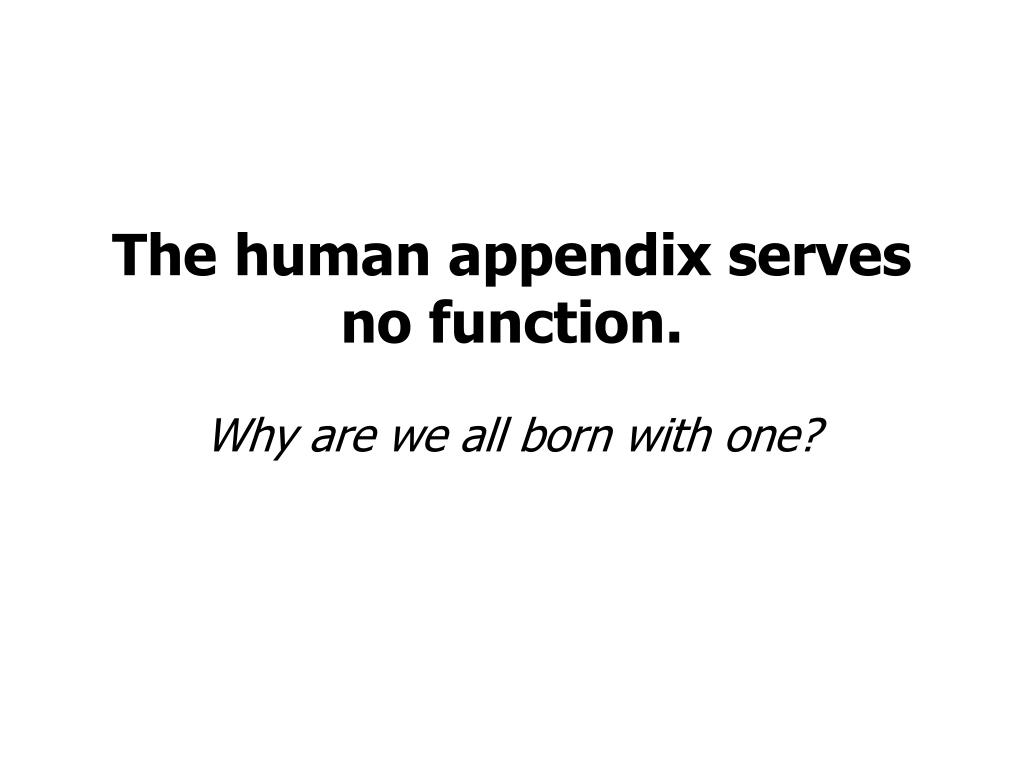 The human appendix serves no function.