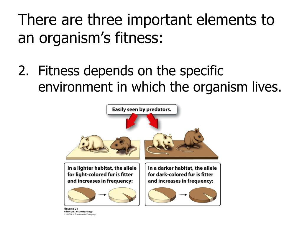 There are three important elements to an organism's fitness: