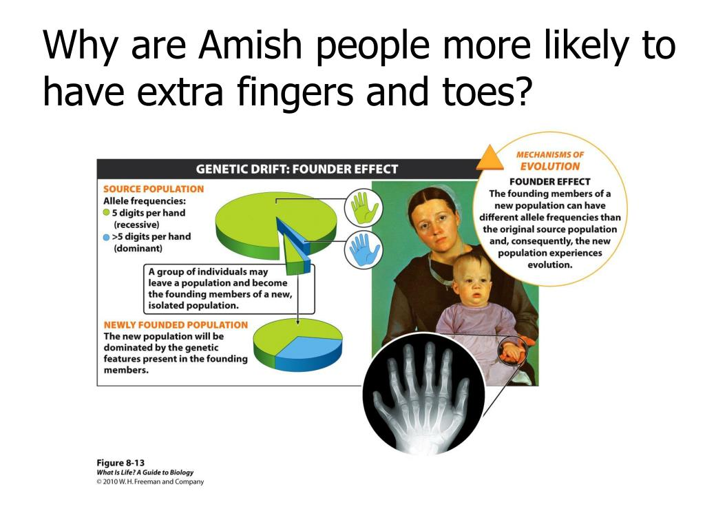 Why are Amish people more likely to have extra fingers and toes?