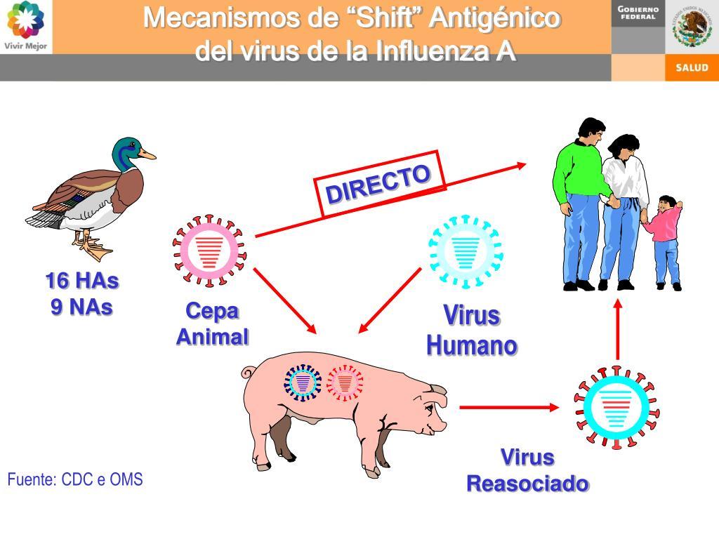 """Mecanismos de """"Shift"""" Antigénico"""