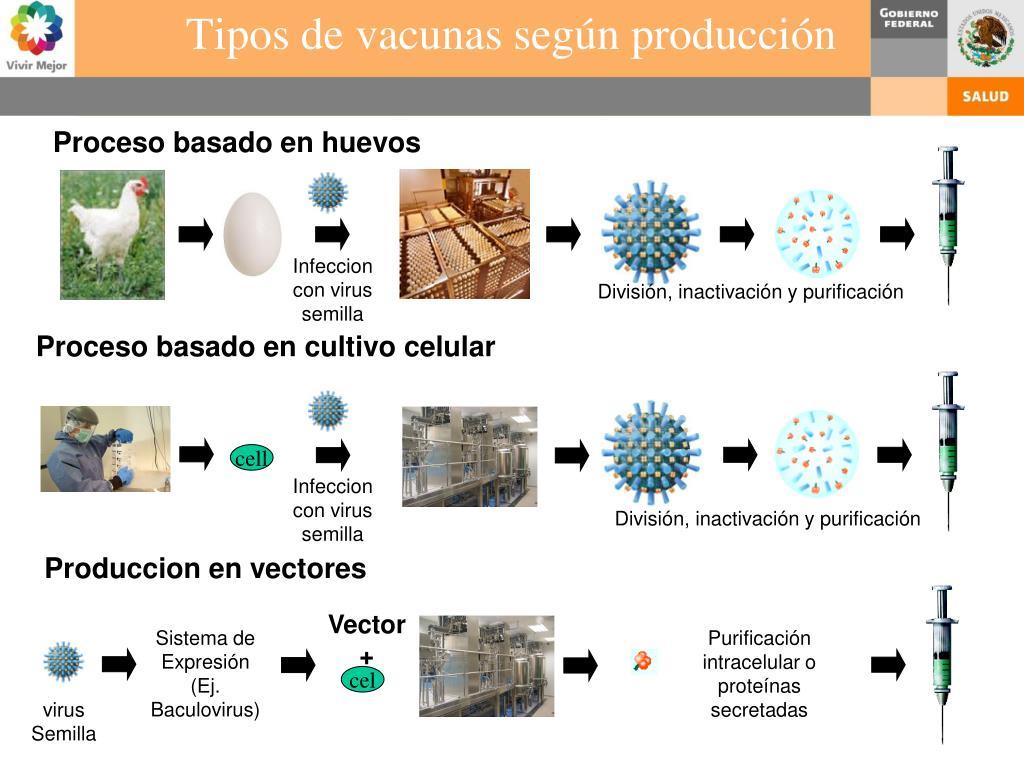 Tipos de vacunas según producción