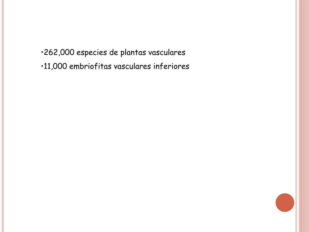 262,000 especies de plantas vasculares