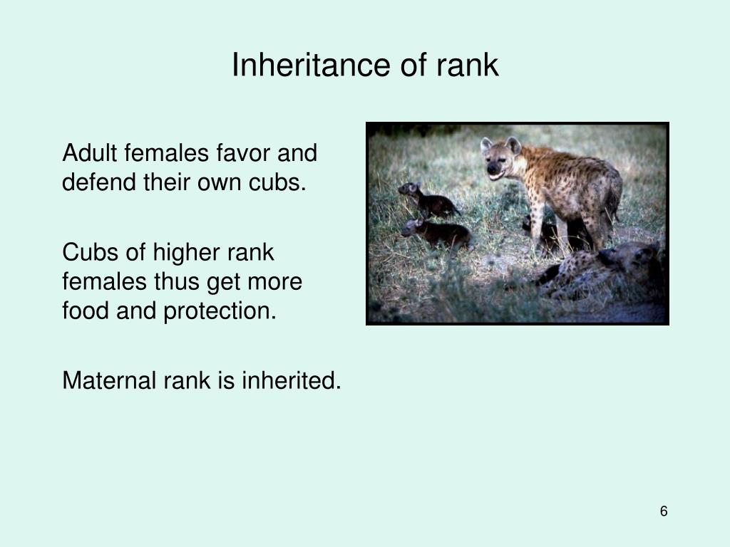 Inheritance of rank