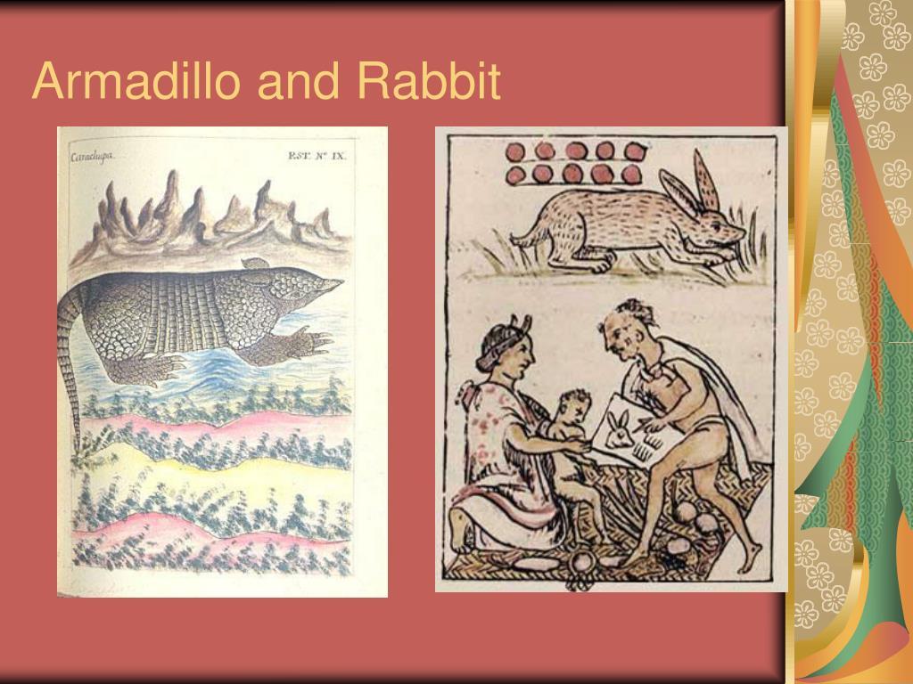 Armadillo and Rabbit