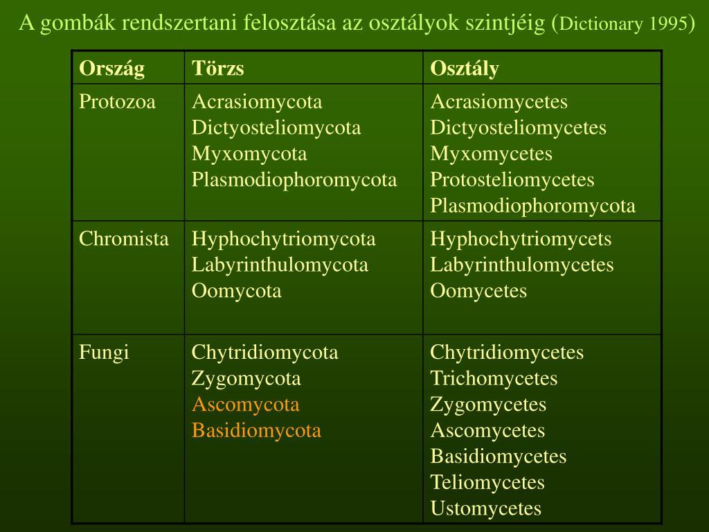 A gombák rendszertani felosztása az osztályok szintjéig (
