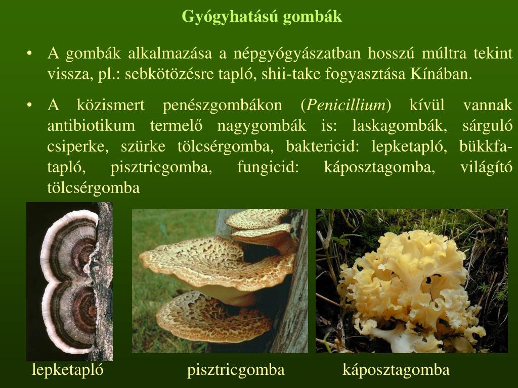 Gyógyhatású gombák