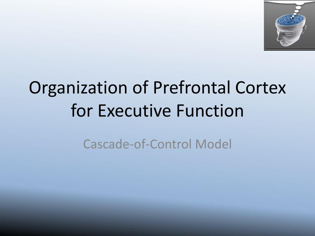 Organization of Prefrontal Cortex for Executive Function