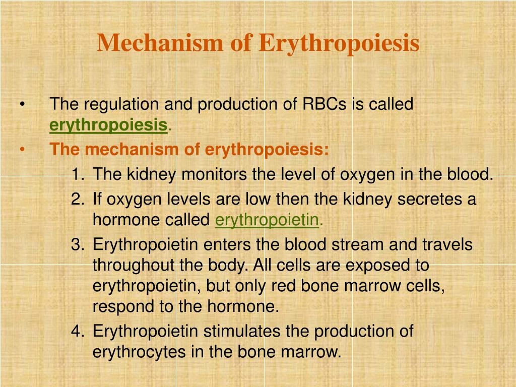 Mechanism of Erythropoiesis