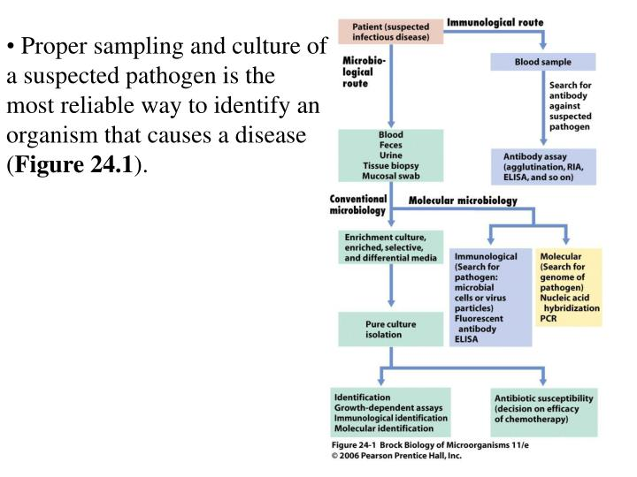 Proper sampling and culture of a suspected pathogen is the most reliable way to identify an organis...
