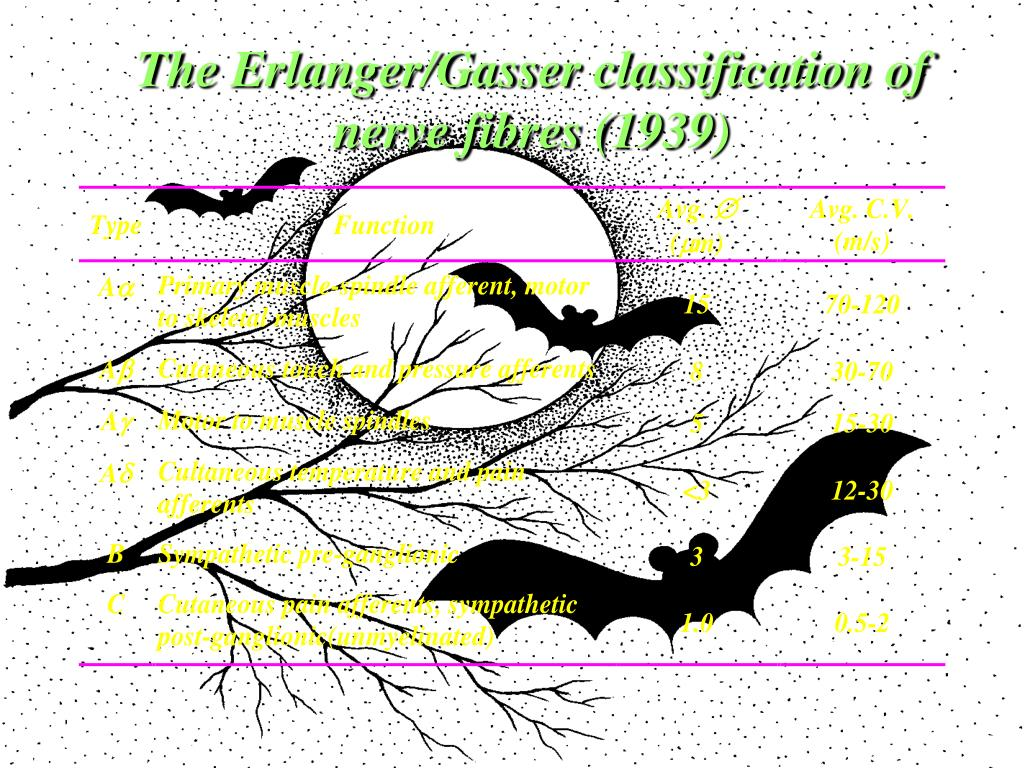 The Erlanger/Gasser classification of nerve fibres (1939)