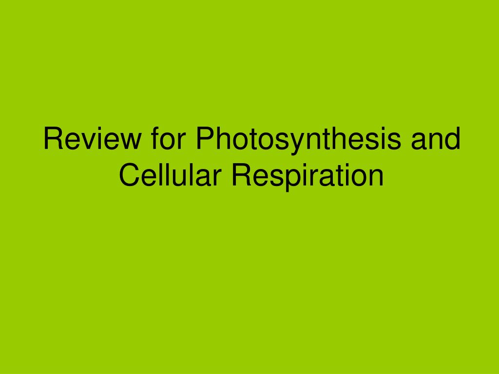 Photosynthesis cellular review respiration and