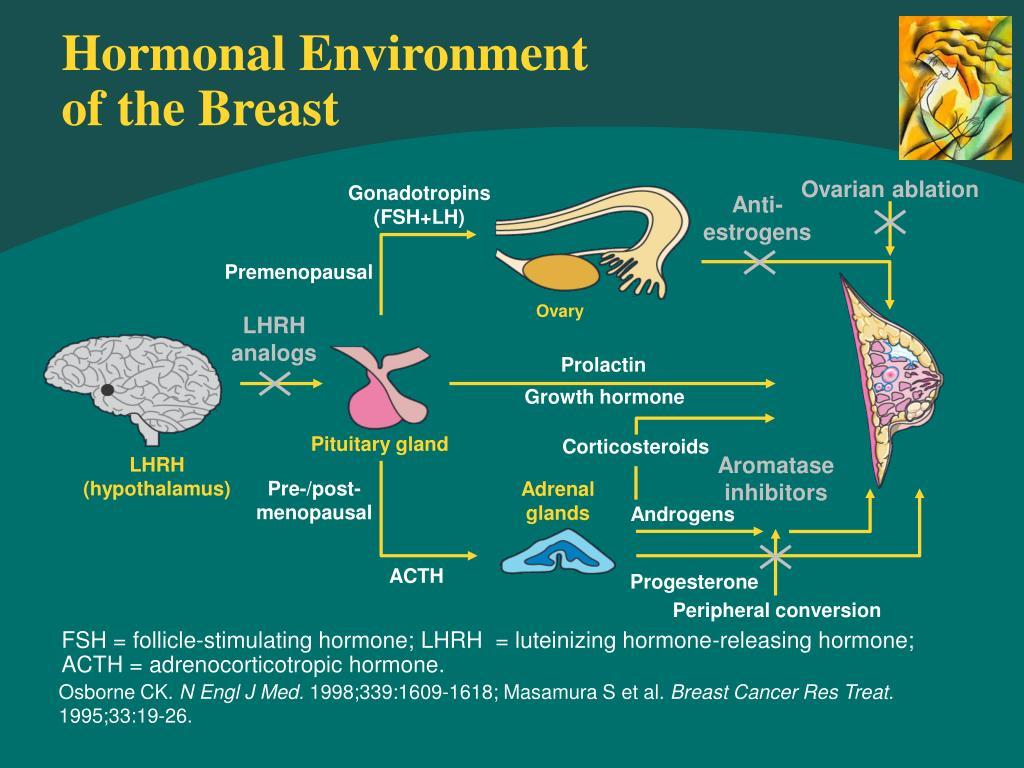 Hormonal Environment