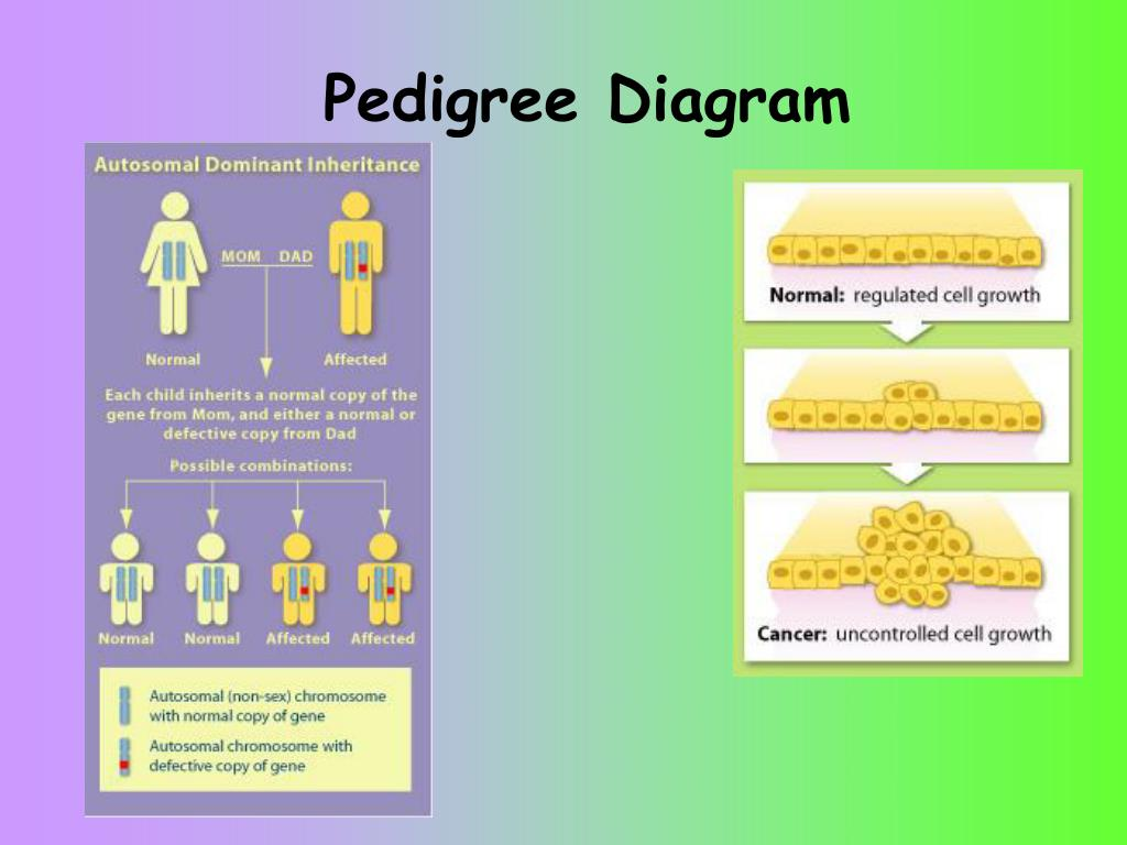 Pedigree Diagram