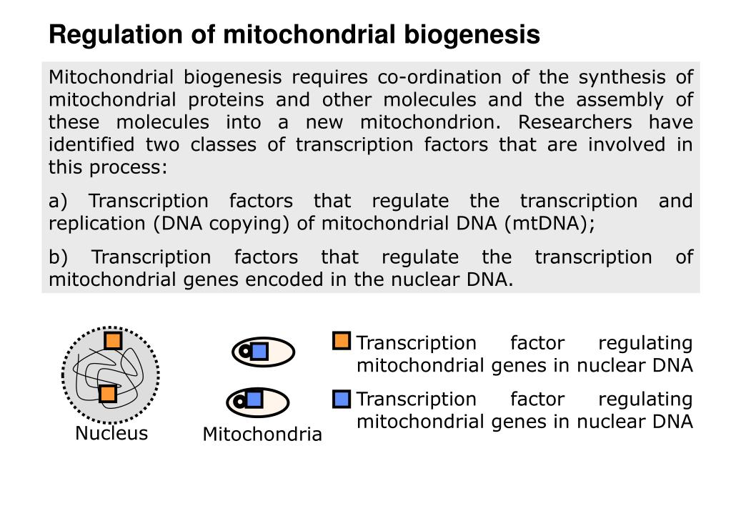 Regulation of mitochondrial biogenesis