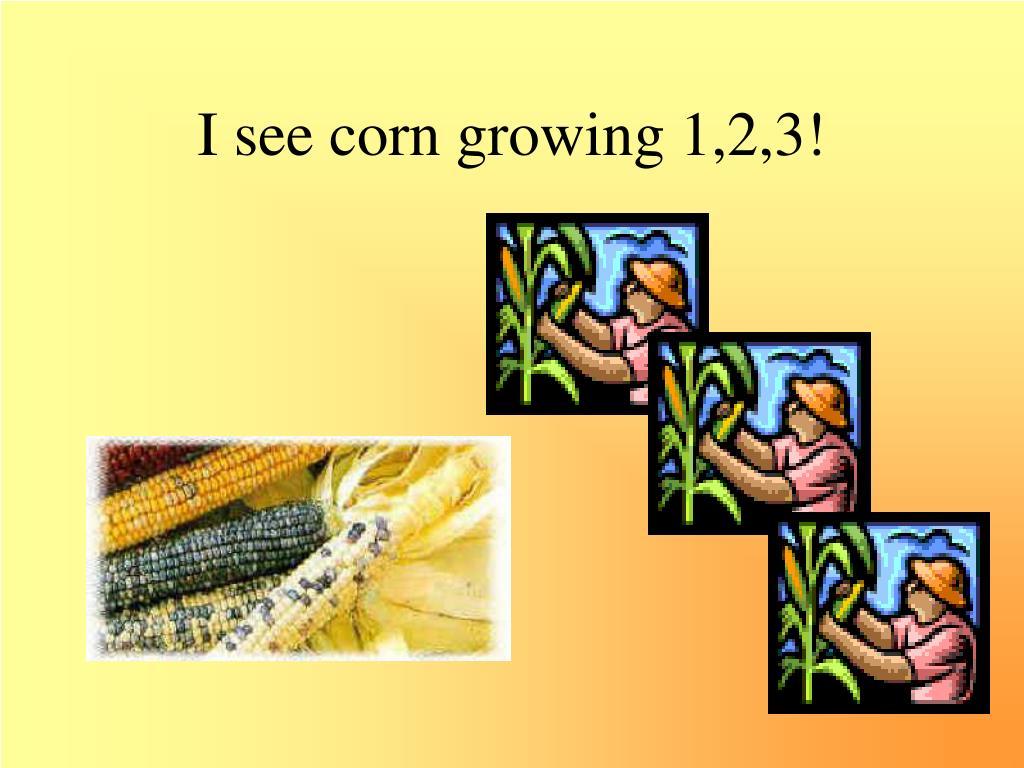 I see corn growing 1,2,3!