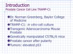 introduction prostate cancer cell line tramp c1