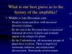 what is our best guess as to the history of the amphibia37