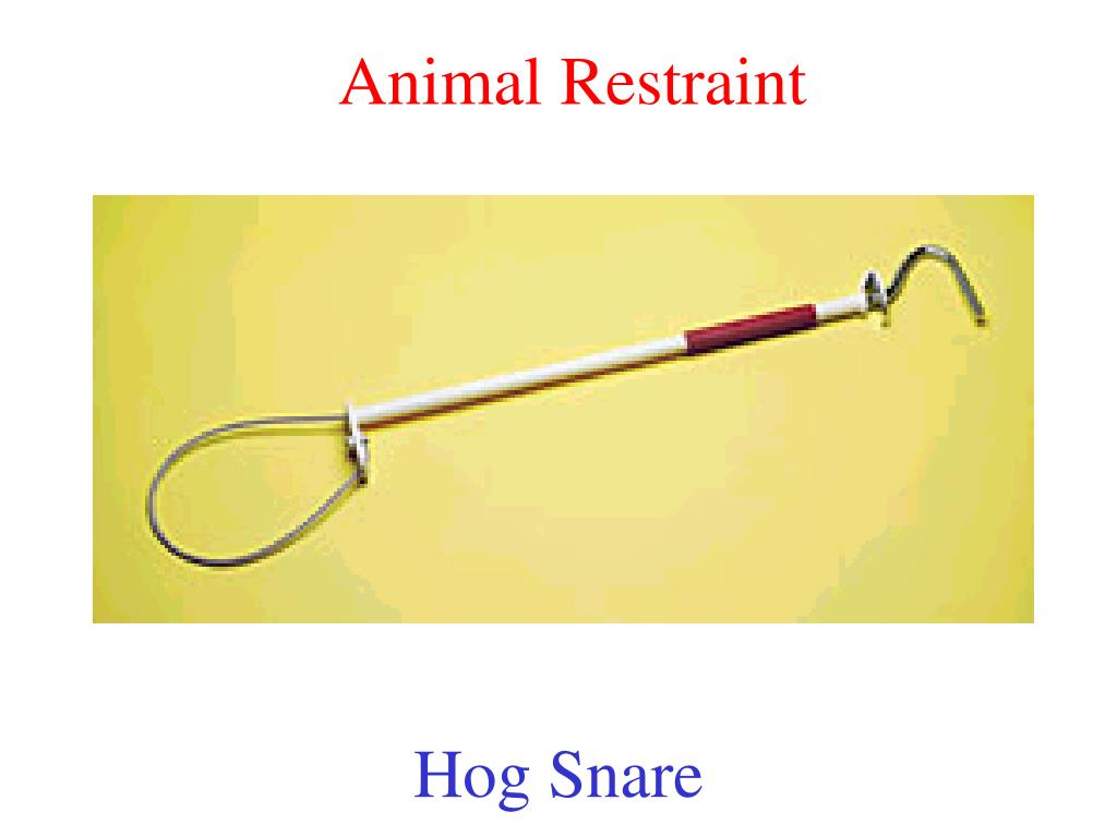 Animal Restraint
