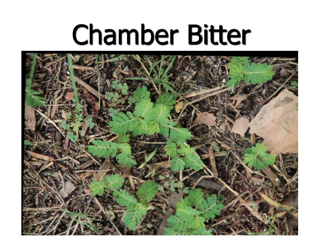 Chamber Bitter