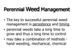 perennial weed management