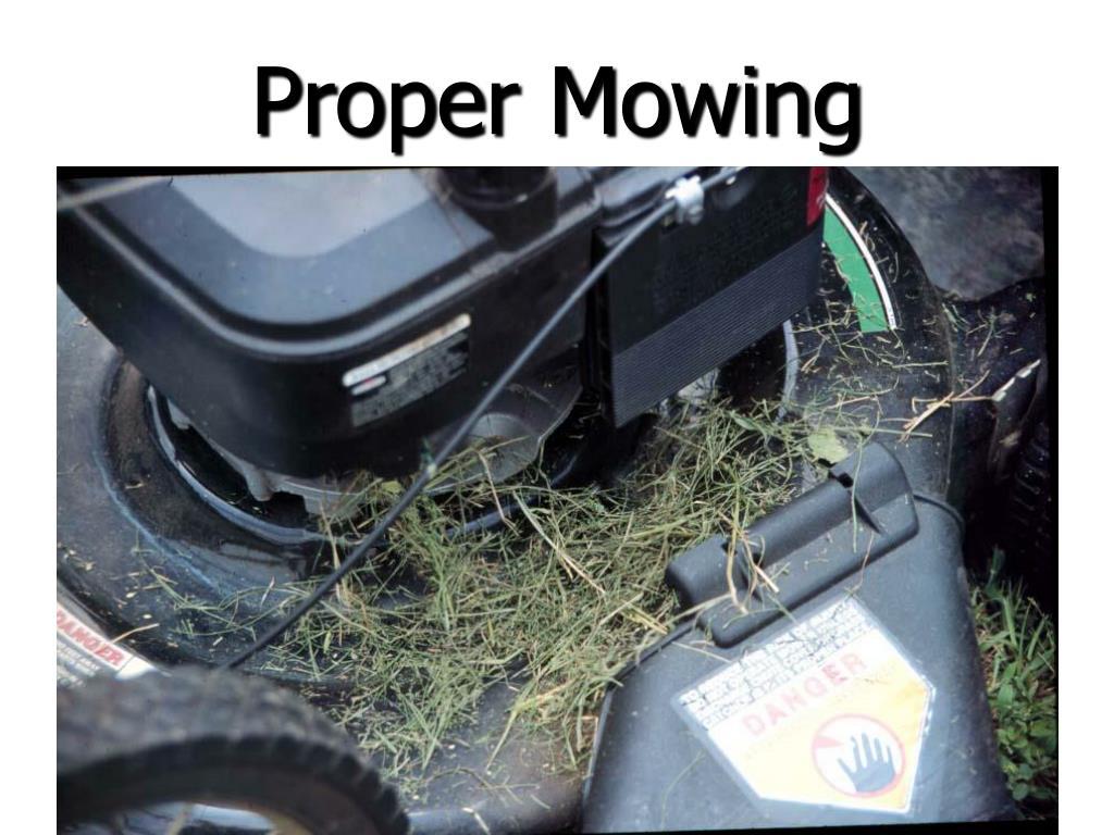 Proper Mowing