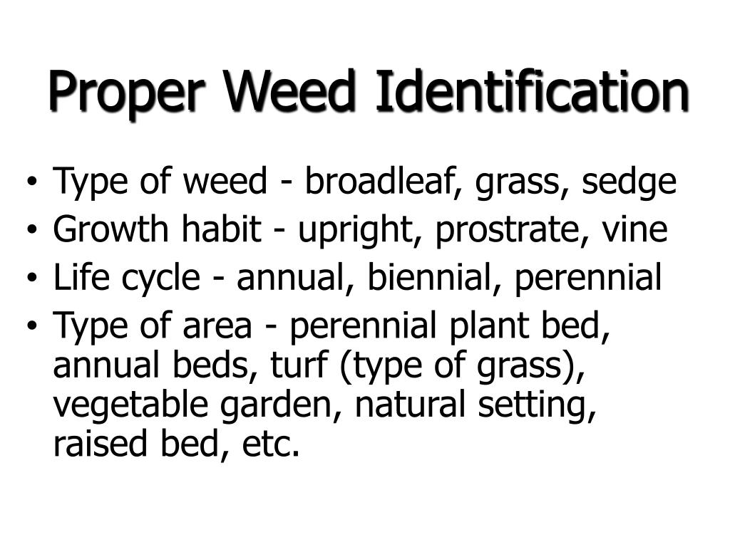 Proper Weed Identification