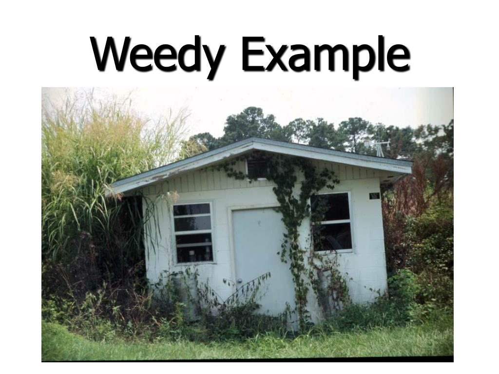 Weedy Example