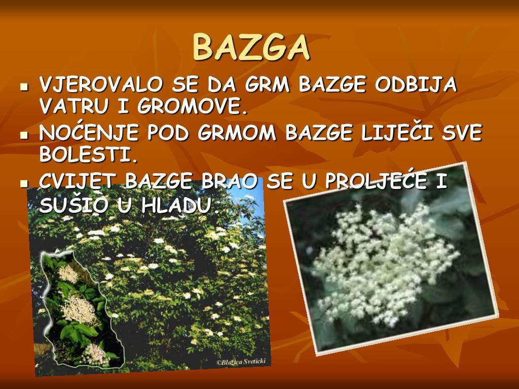 BAZGA