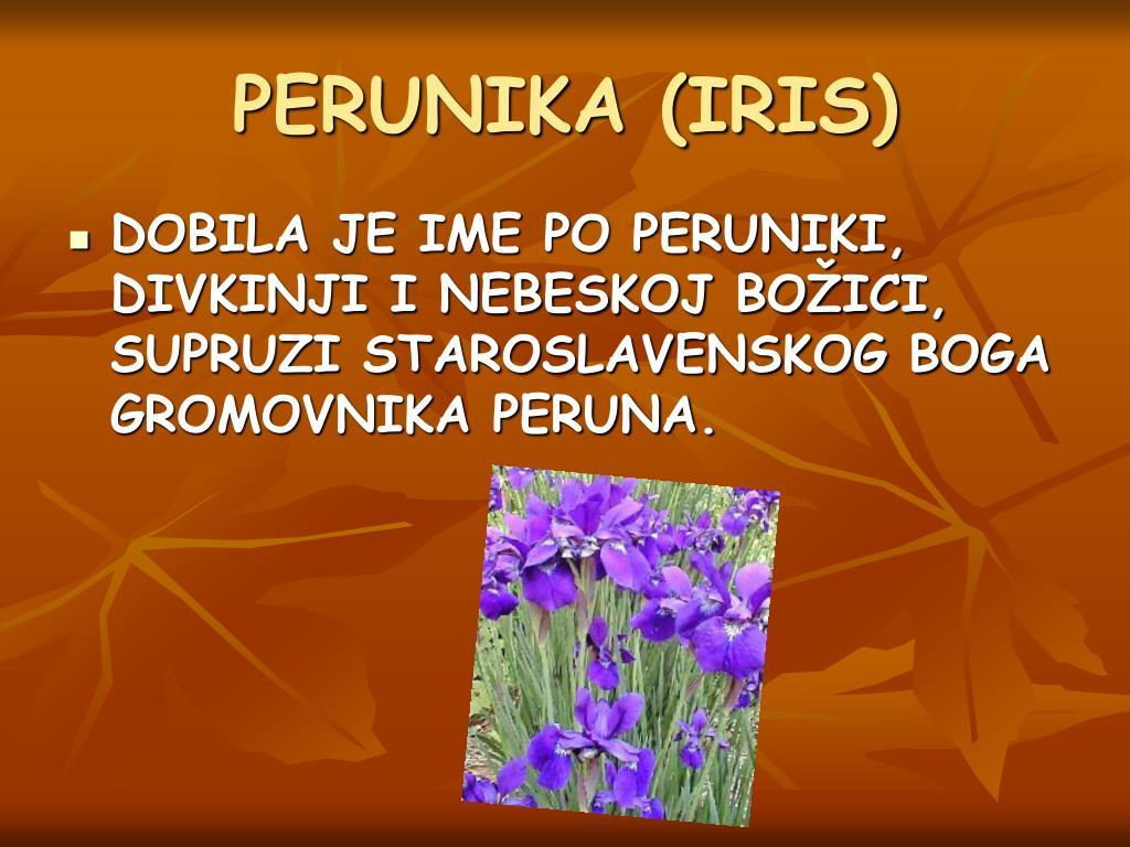 PERUNIKA (IRIS)