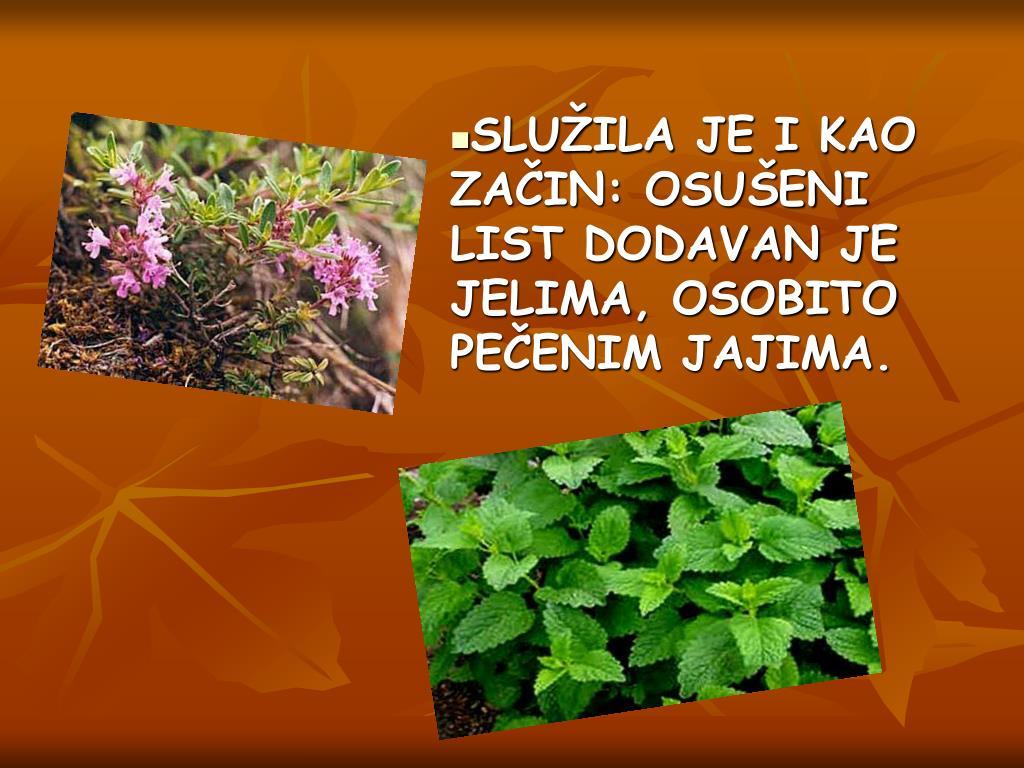 SLUŽILA JE I KAO ZAČIN: OSUŠENI LIST DODAVAN JE JELIMA, OSOBITO PEČENIM JAJIMA.