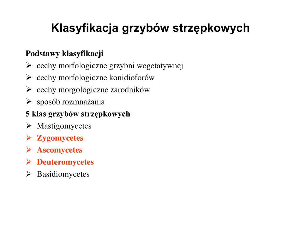 Klasyfikacja grzybów strzępkowych