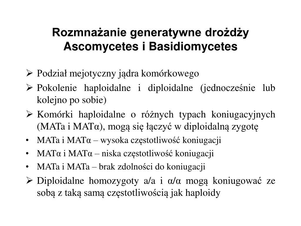 Rozmnażanie generatywne drożdży Ascomycetes i Basidiomycetes