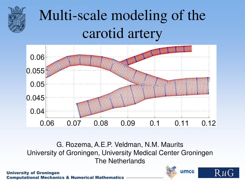 multi scale modeling of the carotid artery