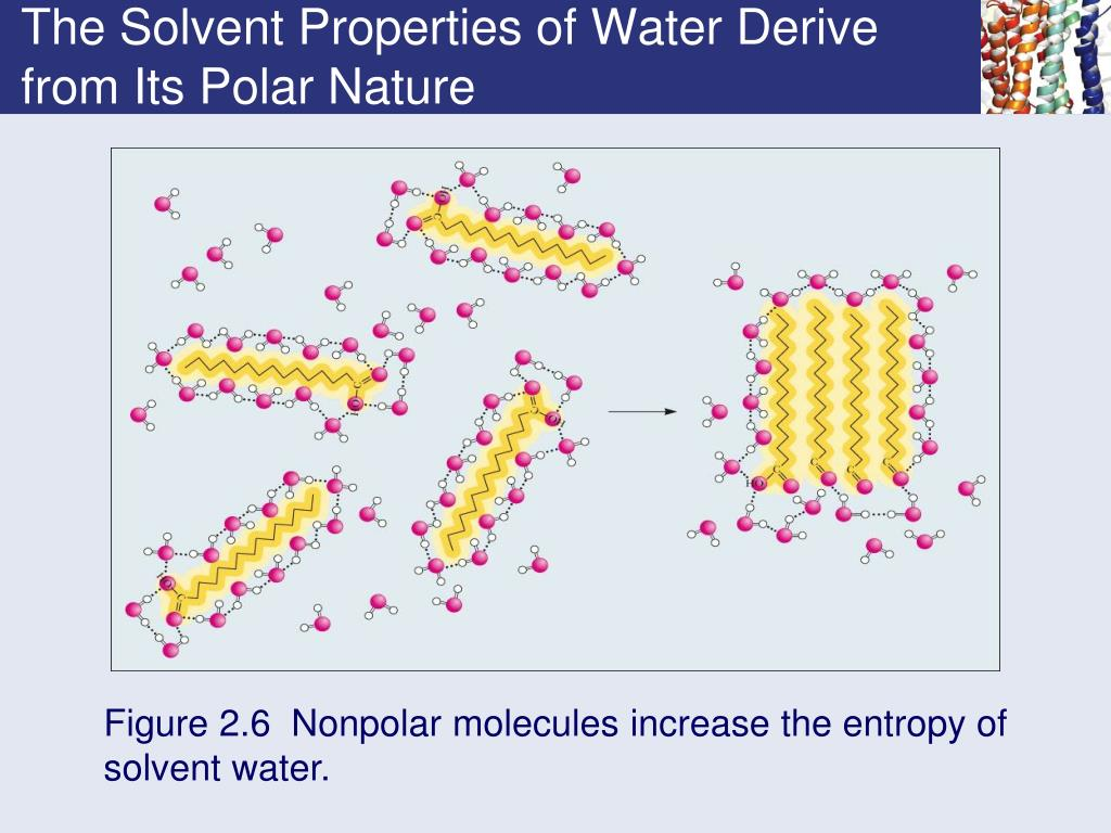 The Solvent Properties of Water Derive