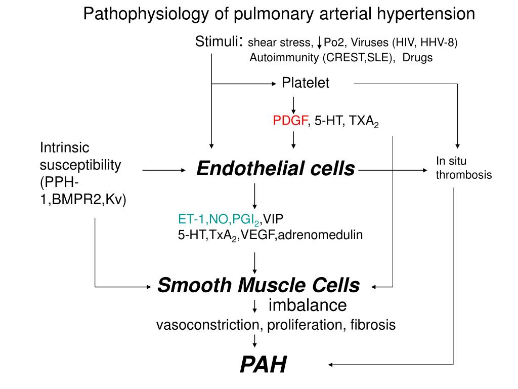 Pathophysiology of pulmonary arterial hypertension