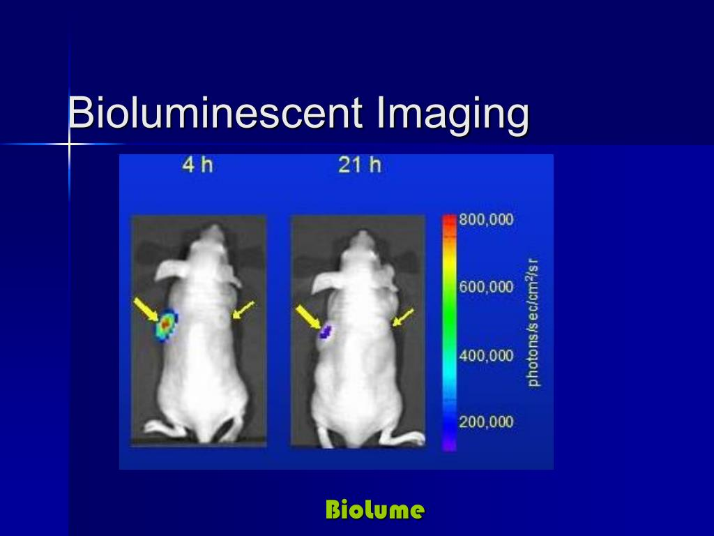 Bioluminescent Imaging
