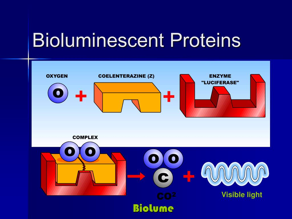 Bioluminescent Proteins