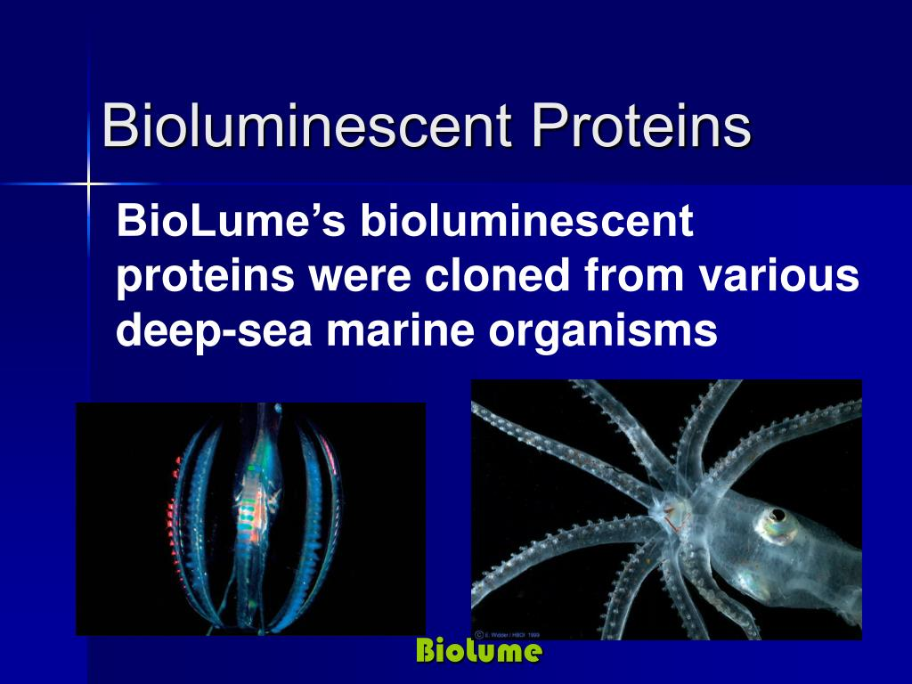 BioLume's bioluminescent proteins were cloned from various deep-sea marine organisms