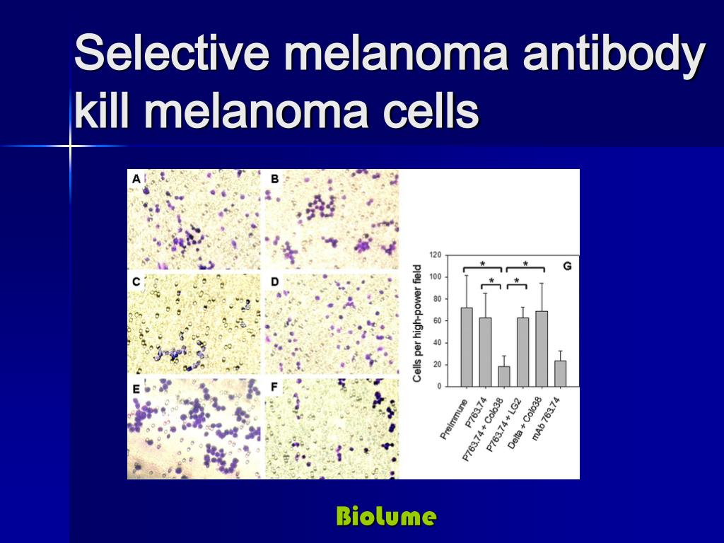 Selective melanoma antibody kill melanoma cells